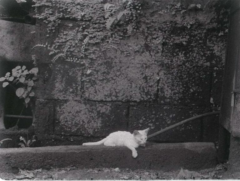 Director's Cat, Tito & Titas