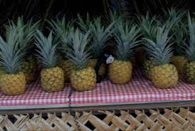 Accent Grave on Ananas, Tamara Henderson, 2013, 3 minutes